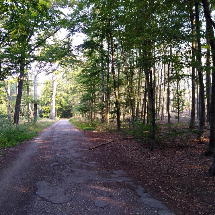 Wald entlang des Rottwegs in Mülheim