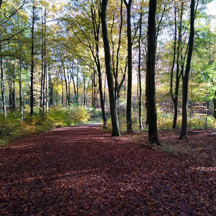 Rundweg im Duisburger Stadtwald mit Herbstlaub