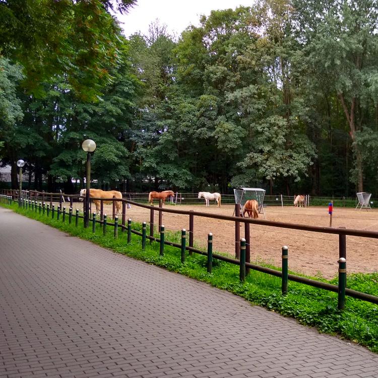Pferdekoppel im Revierpark Mattlerbusch in Duisburg