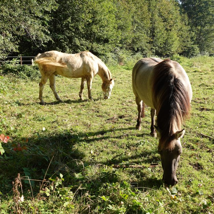 Zwei Pferde auf einer Weide bei Ratingen-Lintorf