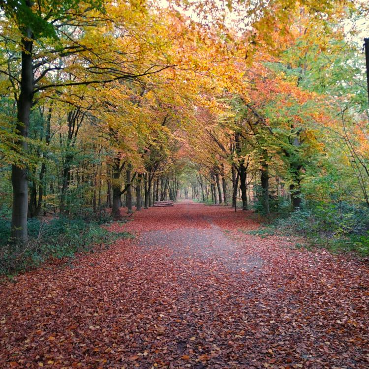 Herbstliche Buchenallee in Duisburg-Baerl