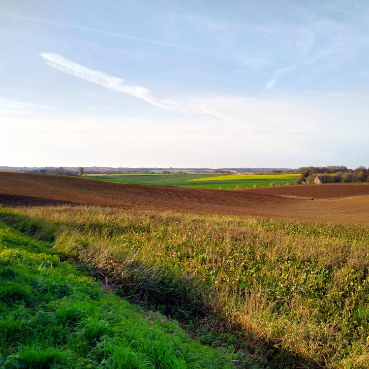 Felder bei Ratingen-Homberg