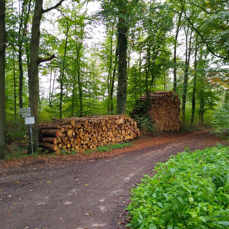 Holzhaufen im Wald
