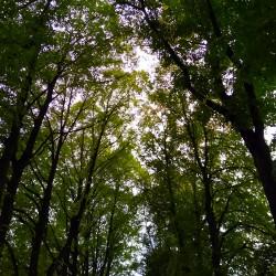 Foto zu Baum, Wald