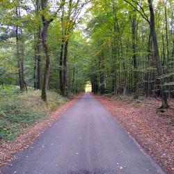 Foto zu wanderweg, Weg, Wanderung