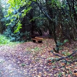 Foto zu Bank, Wald
