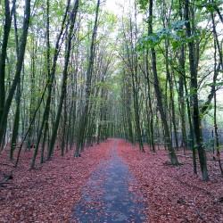 Foto zu wanderweg, Weg, Baum