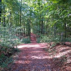 Foto zu Laufstrecke, Stadtsportbund, Duisburg, Stadtwald, Wanderweg, Wald, GPS