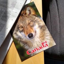 Foto zu Postkarte, Kanada, WolfPack
